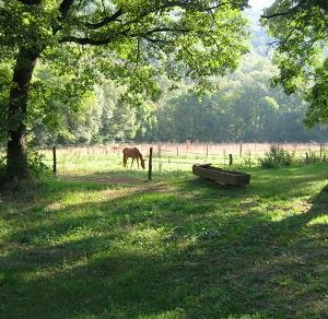 chevaux-sept-08-062