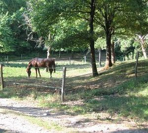 chevaux-sept-08-064