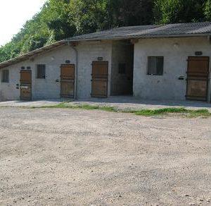chevaux-sept-08-070